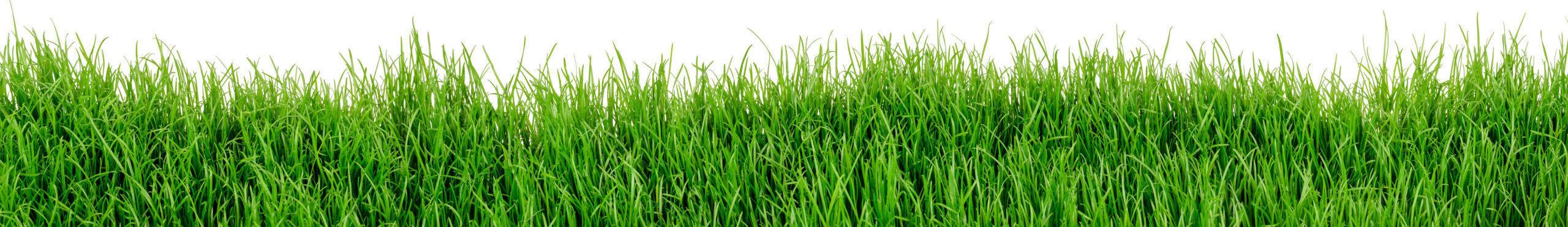 Grünstreifen aus Gras